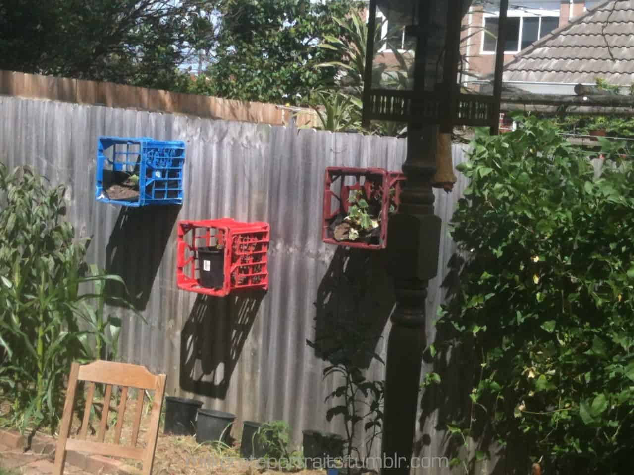 Plant holder milk crates