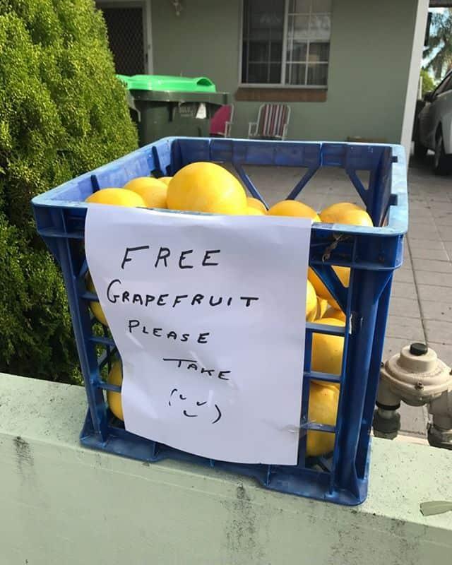 Free grapefruit